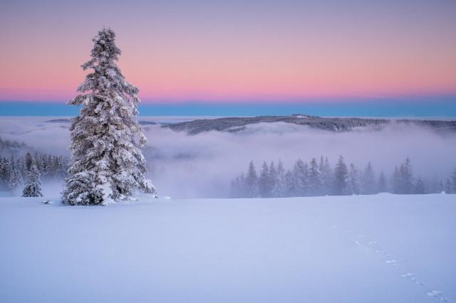Morgendämmerung über Schnee und Nebel