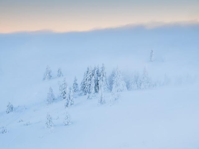 Bäume an der Nebelobergrenze