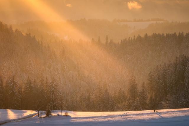 Abendsonne über dem Winterwald