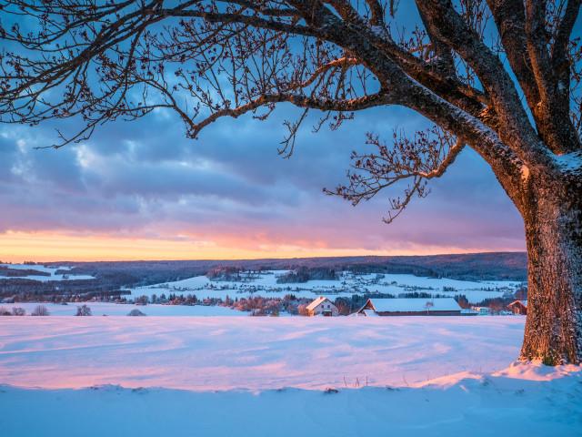 Wintermorgen bei Göschweiler