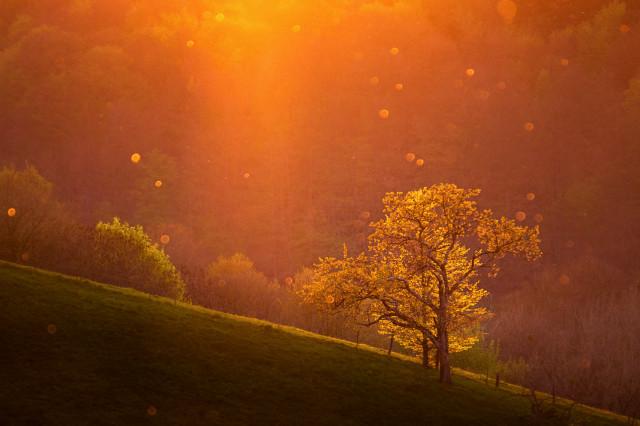 Frühlingsbaum im Gegenlicht