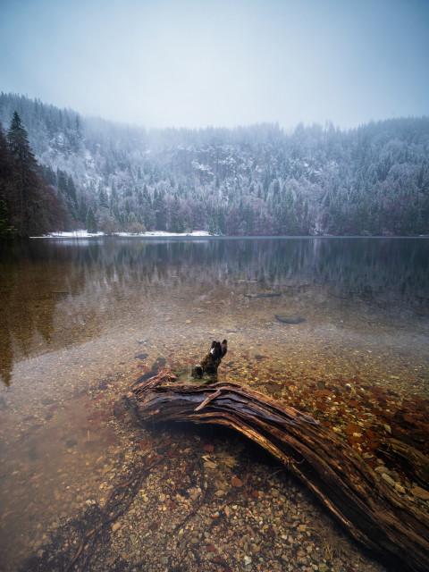 Neuschnee über dem Feldsee