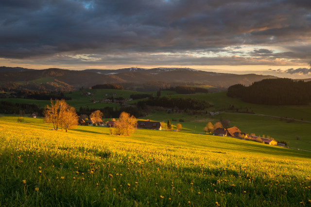 Frühlingswiese und Feldbergblick