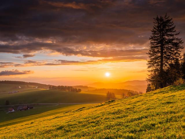 Frühlingswiese bei Sonnenuntergang