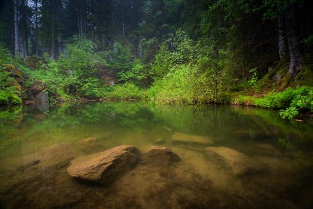 Weiher im Wald im Schwarzenbachtal