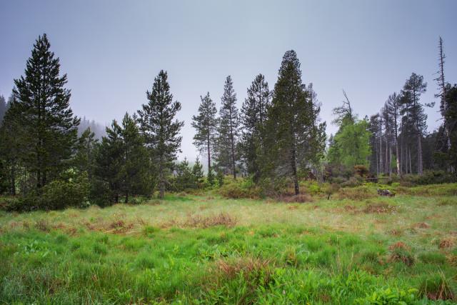 Moorbereich im Naturschutzgebiet Elzhof