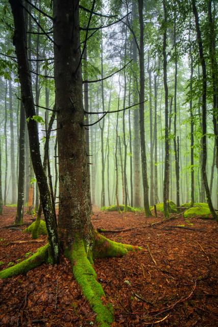 Frühsommerwald bei den Günterfelsen