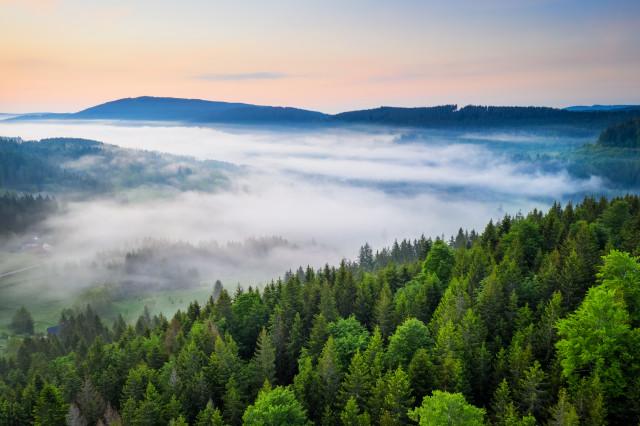 Nebel über dem Titisee