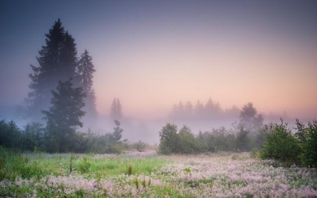 Morgenstimmung am Waldrand