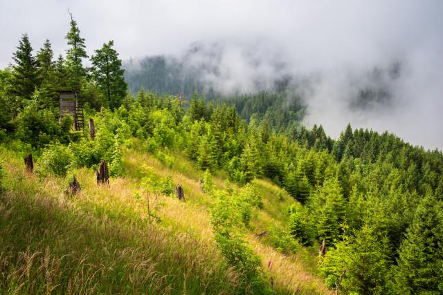 Blick vom Schweizerwald Richtung Feldberg