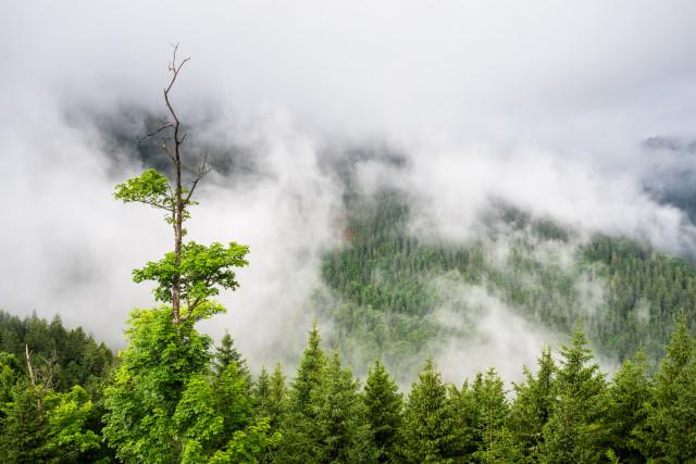 Talblick vom Schweizerwald