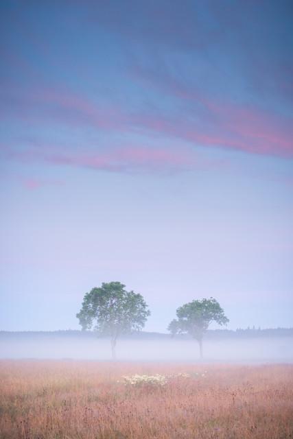 Morgenstimmung in den Rötenbacher Wiesen