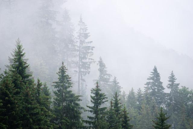 Schwarzwaldlandschaft mit Nebelschwaden