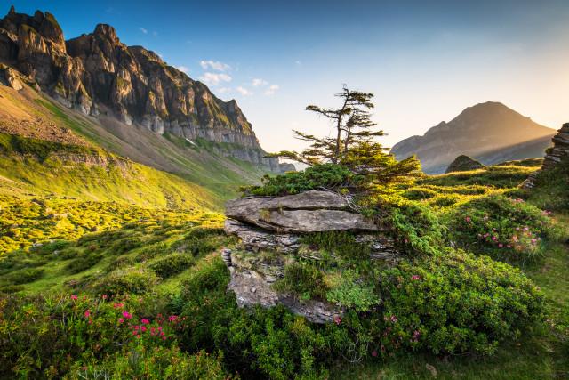 Landschaft auf der Seenalp