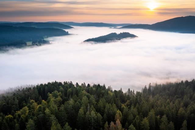 Nebel über Titisee