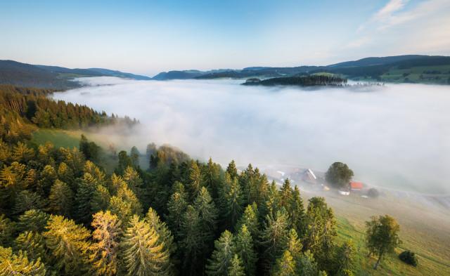 Nebel über Hinterzarten