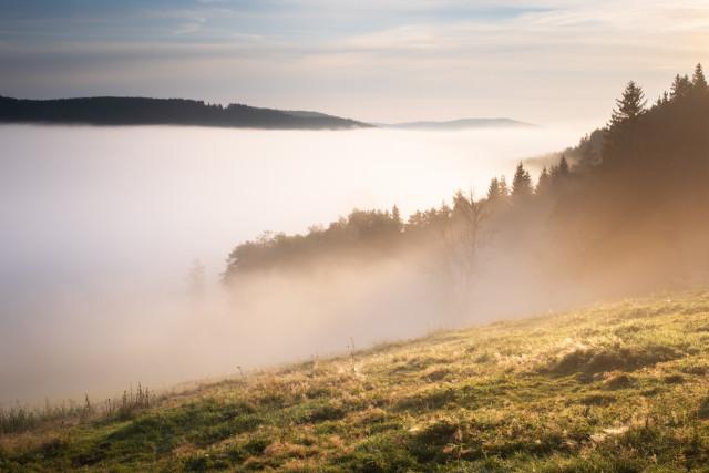 Morgennebel zwischen Hinterzarten und Titisee