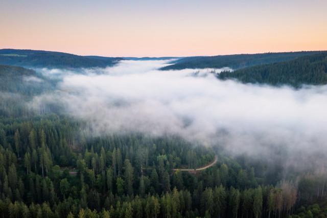 Morgennebel über der Haslach
