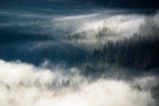 Nebel im Wald über dem Seebachtal