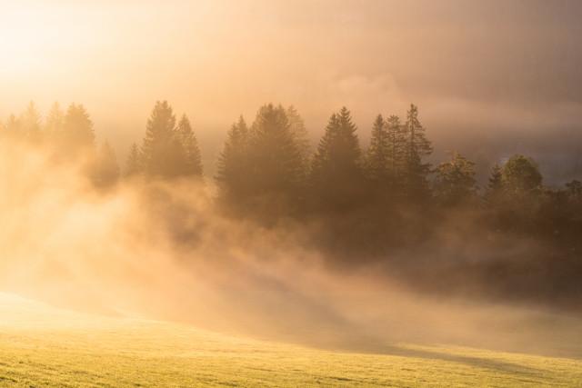 Morgenstimmung im Seebachtal